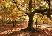 Jeu puzzle Forêt