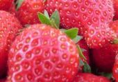Taquin fraises