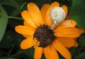 Jeux de puzzle : escargot sur sa fleur