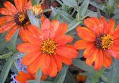 Jeu puzzle fleurs à Nice