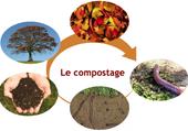Puzzle Compost