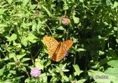 Puzzle papillon ! ! !