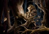 Taquin elfe fantasy