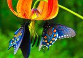 Jeux de puzzle : beauté faune et flore