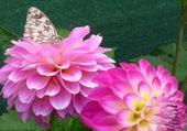 Puzzle en ligne beautés au jardin