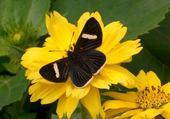 Puzzle gratuit fleur papillon