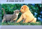 Puzzle amour entre chat et chien