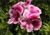 Puzzles fleur