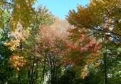 Puzzle Les coloris de l'automne