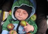 Puzzle en ligne premiere pommes