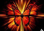 Puzzle papillon fun