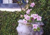 Puzzle fleurs en pots