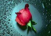 Jeu puzzle rose
