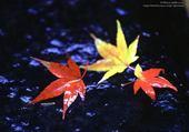 Taquin feuilles d'automne