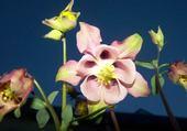 Puzzle fleurs de france