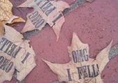 Taquin feuilles