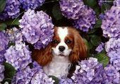 Jeux de puzzle : amour de petit chien!