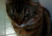 Puzzle Taquin mignon petit chat