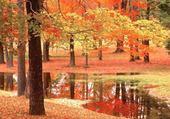 Puzzle Taquin automne