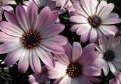Puzzle Taquin fleurs