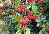 Puzzles fruits d'automne