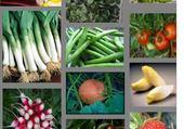 Jeux de puzzle : fruits et légumes
