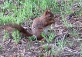 Puzzle en ligne ecureuil hôtel