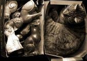 Puzzle chat -vrai -faux