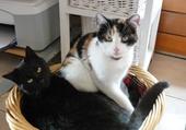 Taquin 2 chats trop mimi