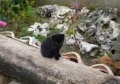 Puzzle Jeux de puzzle : chaton noir trop mignon