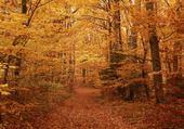 Jeux de puzzle : forêt d'automne