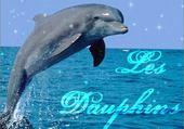 Puzzles mon dauphin