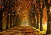 Taquin alllée d'automne