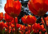 Puzzle les jolies fleurs du printemps