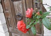 Puzzle des roses partout