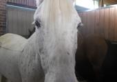Puzzle Un cheval top !
