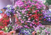 Puzzle en ligne quelques fleurs pour