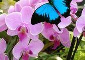 Puzzle en ligne jardin des papillons