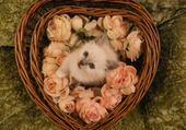 Coeur à la Bounecyane