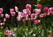 Puzzle jardin printemps