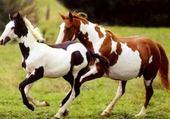 Puzzle en ligne Les chevaux