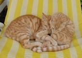 Taquin Petits chats en Tunisie