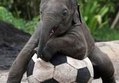 Puzzle Puzzle Elephant