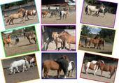 Puzzle en ligne poney montage