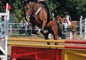 Taquin Angel mon cheval