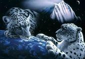 Puzzle Puzzle Tigres nuit