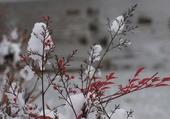 merveilleux hiver