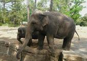 Jeu puzzle elephant