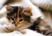 Puzzle Jeu puzzle petit chaton
