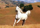 Puzzle gratuit un cheval au galop